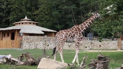 V jihlavské zoo přibudou noví obyvatelé - hliněná zvířata